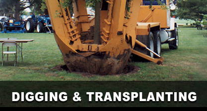 Digging & Transplanting
