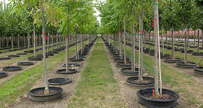Nursery, Grower & Greenhouse Products