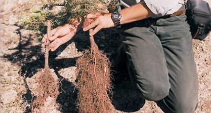 Products + Mycorrhiza and Microbe Inoculants