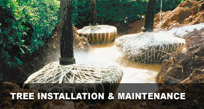 Tree Installation & Maintenance