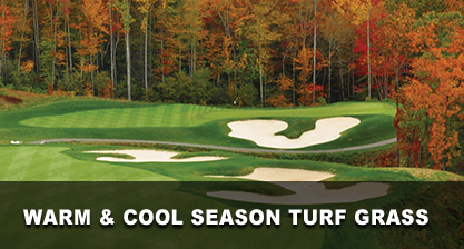 Warm & Cool Season Turf Grass